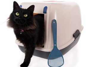 147916959-litter-box-size-cat-632x475