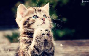 gatito,-pies,-oracion-184796