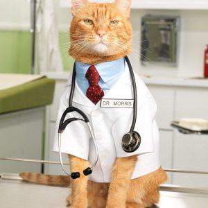 seguros-para-gatos