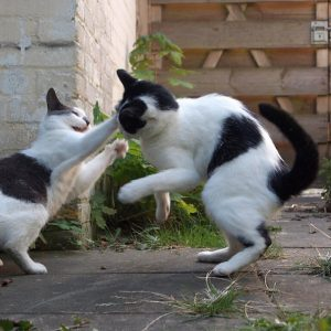 Briti and Dushi in a catfight