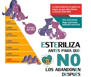 CARTEL-CAMPAÑA-ESTERILIZACION